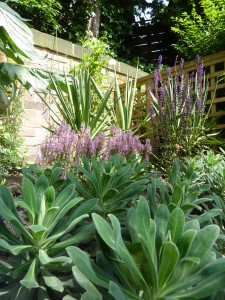 Natural style and colour in the Print Maker's Garden