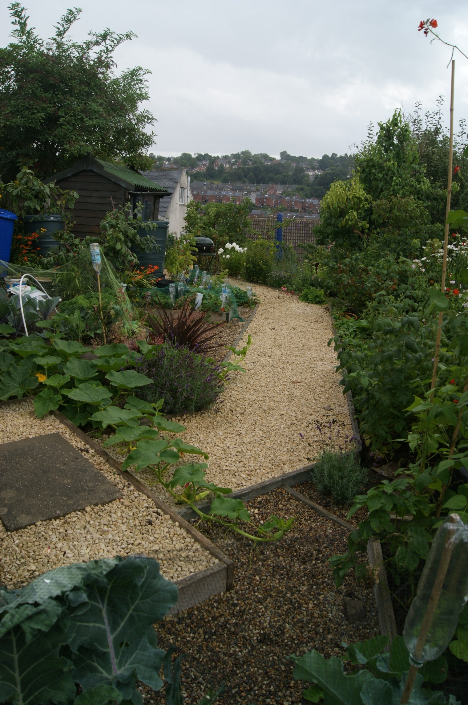 Vegetable garden in Sheffield U.K.